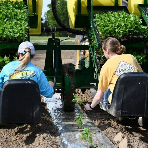 Katelyn and Madison planting peppers.